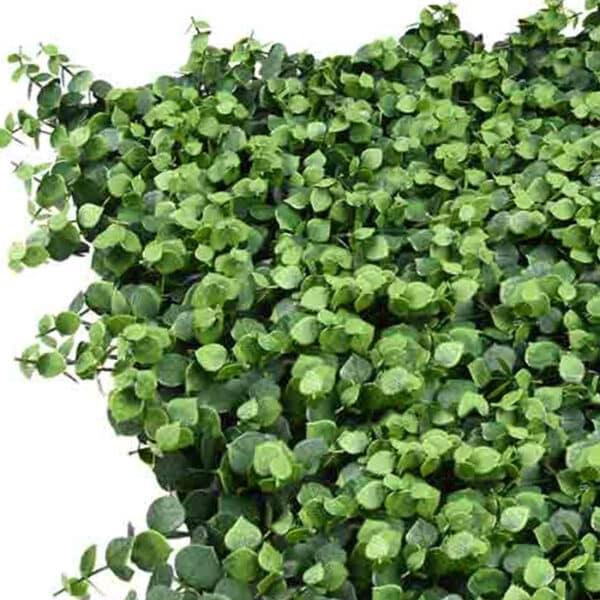 jardín vertical hojas verdes