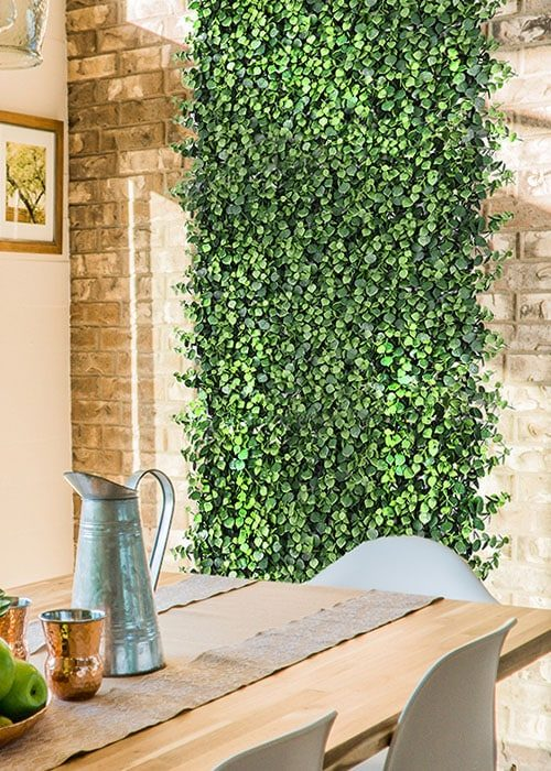 jardín vertical suculentas